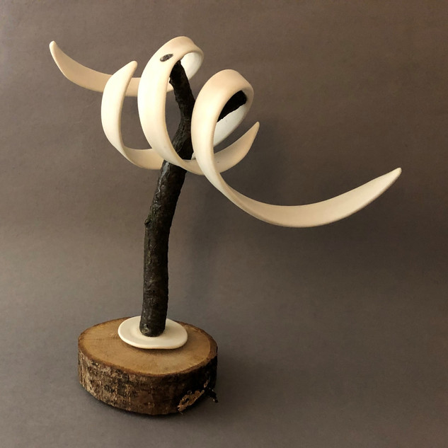 Rooted#2 - Porcelain Wood - H20cm W18cm