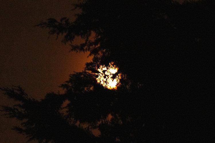 tree moon 0.5.jpg