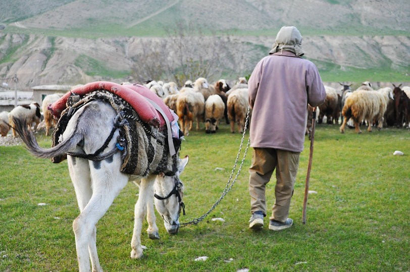 shepherd deh balmini.jpg