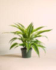 Grower-Pot-Studio-Shot1.jpg