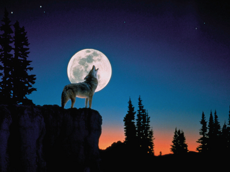 """The Full """"Wolf"""" Moon. A New Year Moon."""