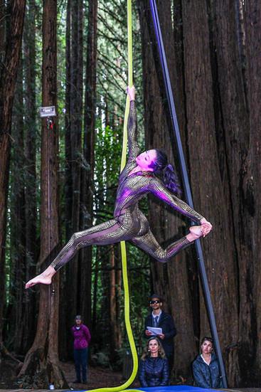 AEM - Rope Forest Edit-.jpg