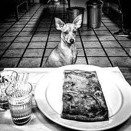 Hunden betteln abgewöhnen, Impulskontrolltraining und Frustrationstoleranz in der Hundeschule Neuss und Düsseldorf.jpg