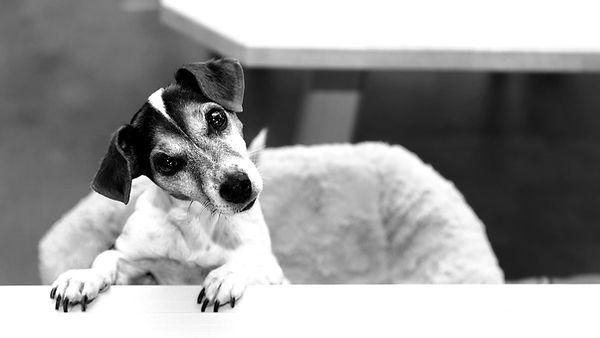 online Beratung bei Verhaltensproblemen wie Trennungsangst, Aggression gegenüber Hunden, oder wenn Hund keine Bindung hat. Online Verhaltensberatung bei Verhaltensproblemen über smartphone.