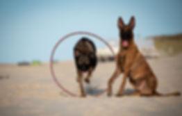 hunde tricks kunststuecke shutterstock_1