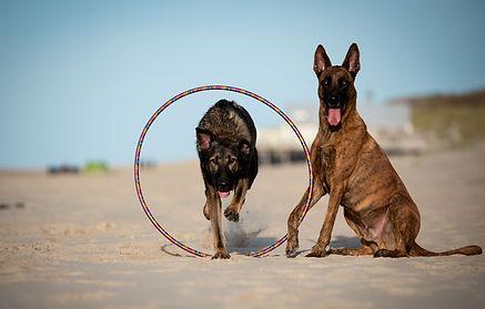 hunde tricks kunststuecke agility Hundesport