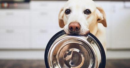 Hund apportiert Napf, Dummytraining, artgerechtes Training mit Retriever