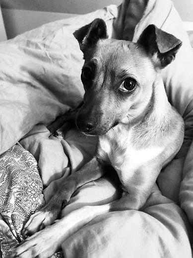 Trennungsangst Hund, Trennungsproblem beim Hund, Hund jaukt wenn er alleine ist, Hund kann nicht alleine bleiben.jpg