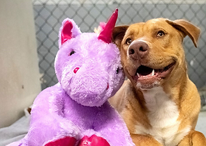 Dog Who Kept Sneaking into Dollar General for a Stuffed Purple Unicorn Gets His Toy and a New Start