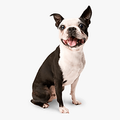 256-2560140_happy-dog-png-isolated-dog.p