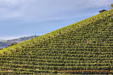barbaresco vineyard.jpg