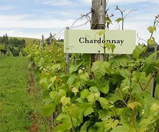 chardonnay sign.webp