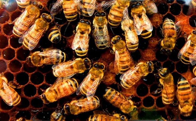 One-Third of U.S. Honeybee ...