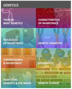 Learn Genetics