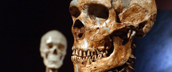 DNA Study Shows Why Neanderthals ...