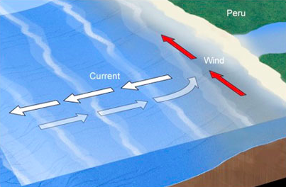 Ocean Currents and Marine Life