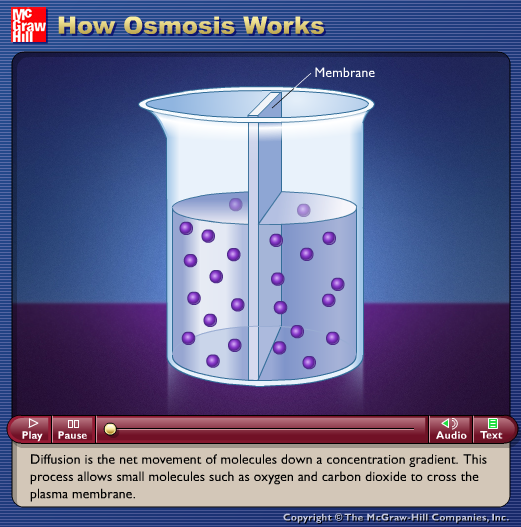 How Osmosis Works Animation