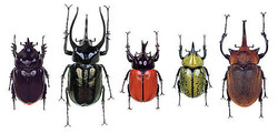 How does Biodiversity loss affect...