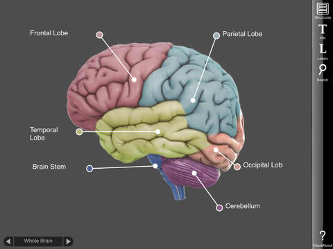 iPad App 3D Brain