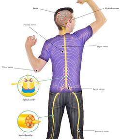 Human Body Interactives