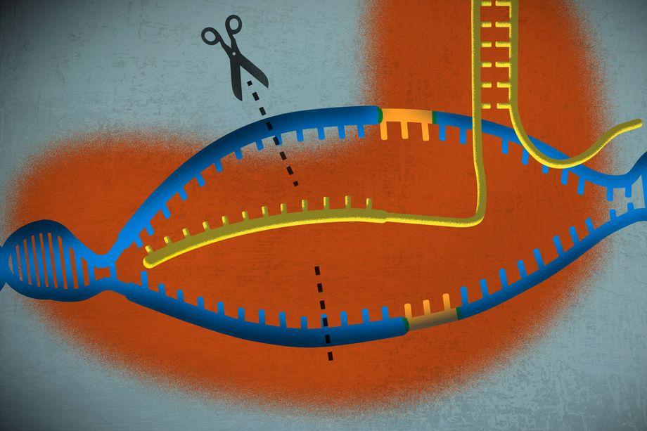 A simple guide to CRISPR