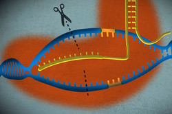 A simple guide to CRISPR