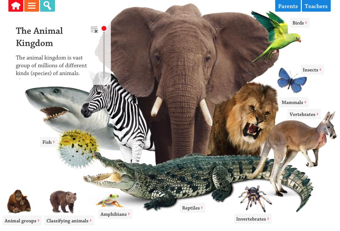 The Animal Kingdom Interactive
