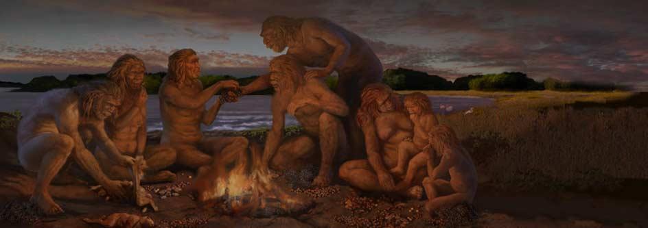 Human Evolution Evidence