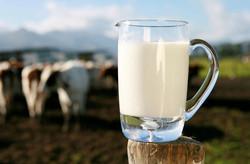 Milk Drinking Still a Mystery