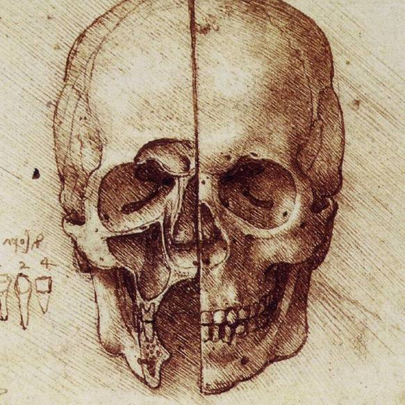 Da Vinci's Anatomical Drawings