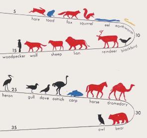 How long do animals life?