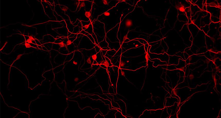 Stem cells: The secret to change
