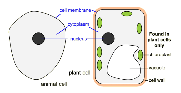 BBC Bitesize Cells