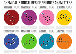 Chemical Structures of Neurotransmit