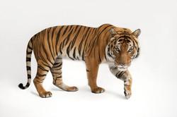 National Geographic - Animals