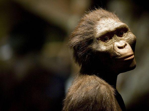 Human Origins Project