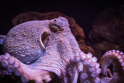 11 Octopuses Caught ...