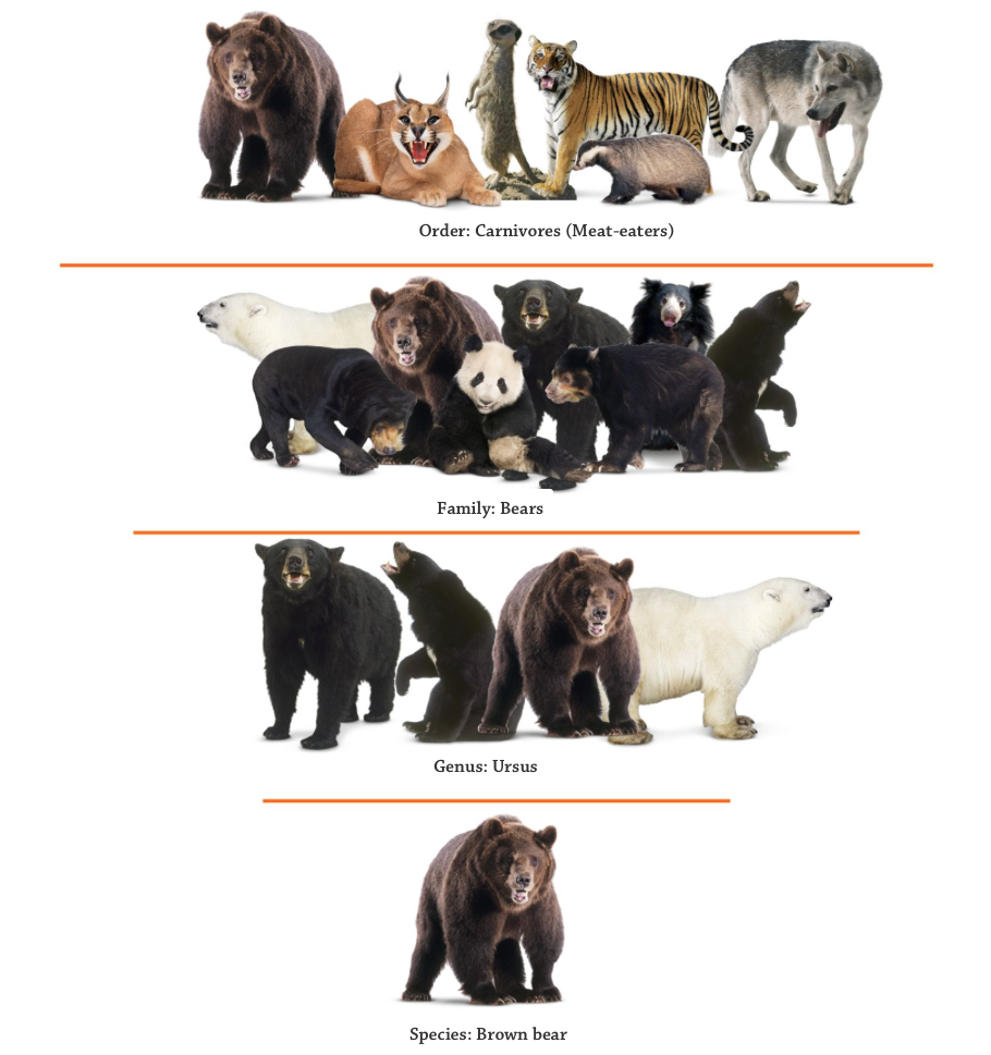Classifying Animals Interactive