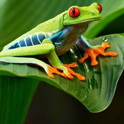 Discovery Curiosity - Biodiversity