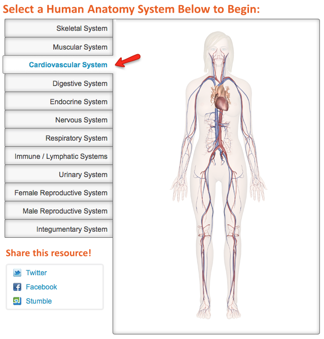 Human Anatomy: Explore the Body