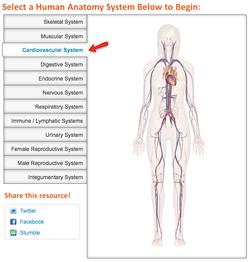 Human Anatomy: Explore the Body