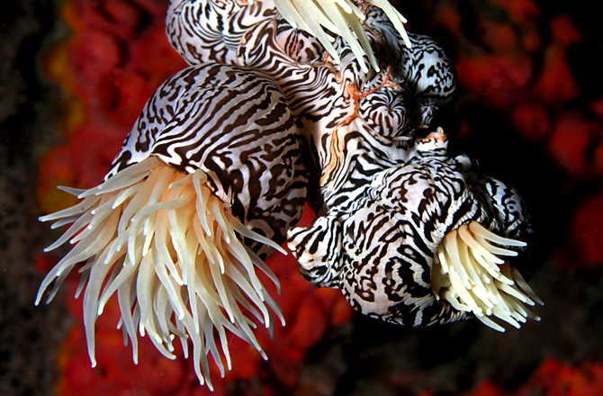 Sea Anemone Is Both Animal and Plant