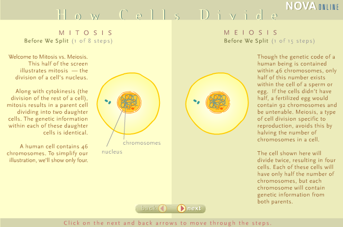 How Cells Divide