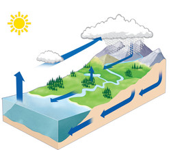 Water Cycle Interactive