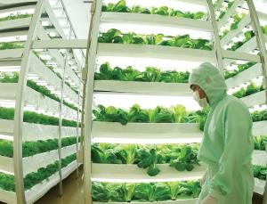 Vertical farms sprouting all ...