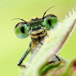 TED Playlist - Insects are awesome!