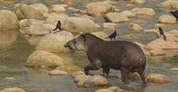 Peru NP Breaks Biodiversity Record