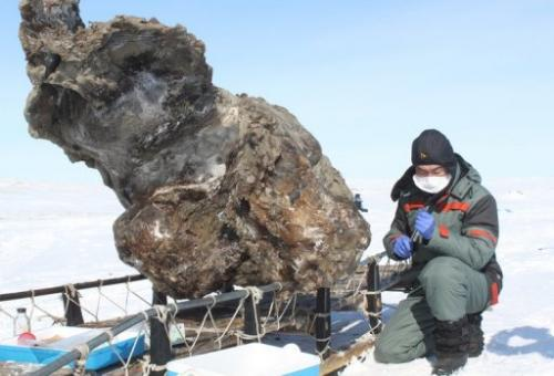 Rare Find of 'Blood' in Mammoth