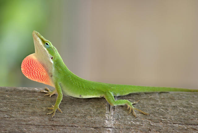 6 Animals That Are Rapidly Evolving