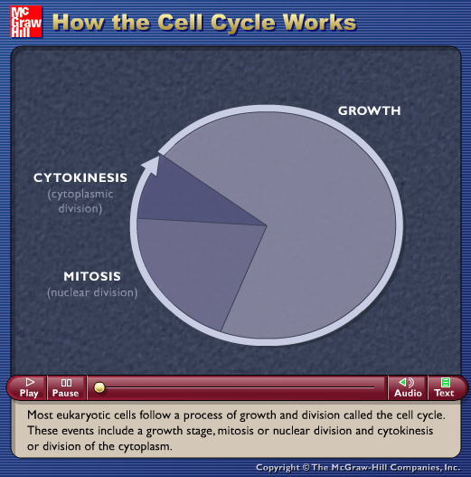 How the Cell Cycle Works Animation